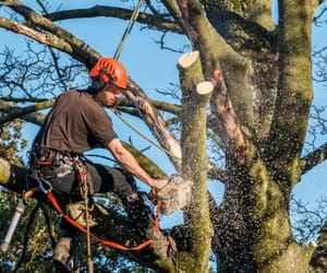 tree services, gta tree removal, and cutting down trees image