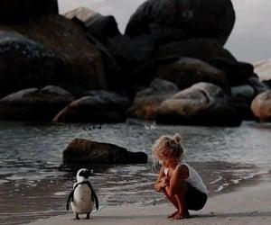 penguin, cute, and beach image
