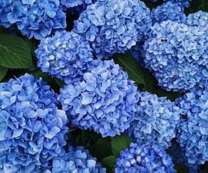 flowers, beautiful, and blue image