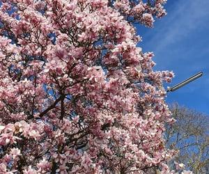 beautiful, blossom, and blue sky image
