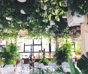 bar, marrakech, and plants image