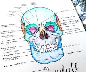 school, study, and bones image