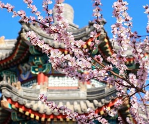 asia, beijing, and bloom image