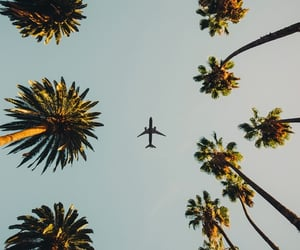 background, palm trees, and summer image