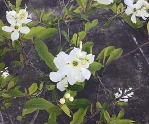 flower, instagram, and 柴田淳 image