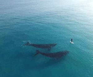 ocean, whale, and sea image