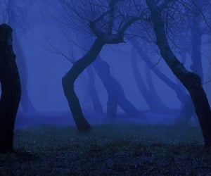 dark, blue, and forest image