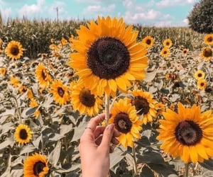 nature, spring, and sunflowers image
