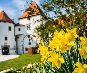 castle, Croatia, and spring image