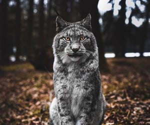 animals, nature, and animales image