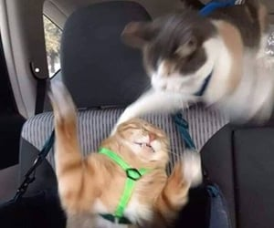 2020, tokat, and cat image