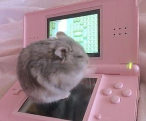 hamster, pink, and cute image