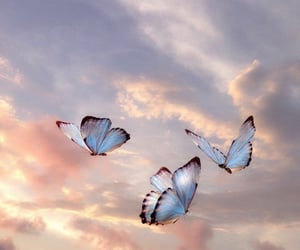 butterfly, blue, and freedom image