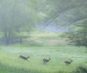 green, mist, and nature image