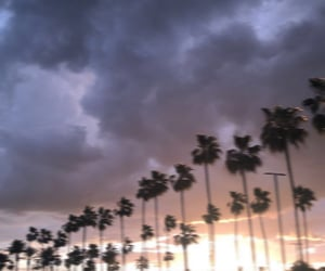 aesthetic, blur, and palm trees image