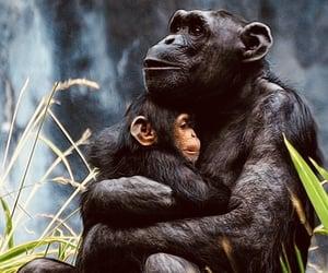 animals, beautiful, and wildlife image