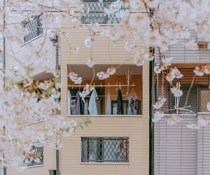 cherry blossoms, flowers, and life image