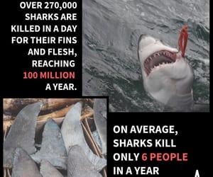 awareness, marine, and predator image