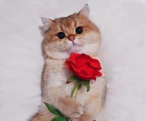 best friend, cat, and cuteness overload image