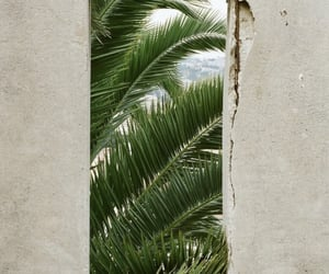 green, palms, and nature image