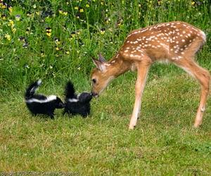 animal, skunk, and bambi image