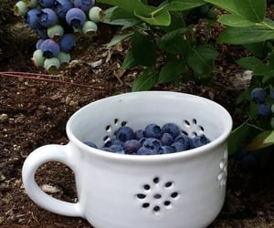 aesthetic, blueberries, and fruit image