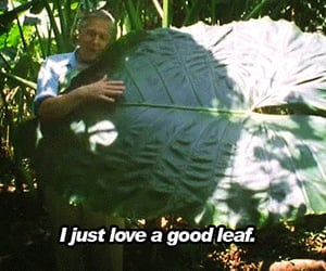 gif and leaves image
