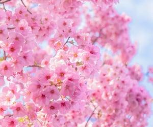 flower, spring, and sakura image