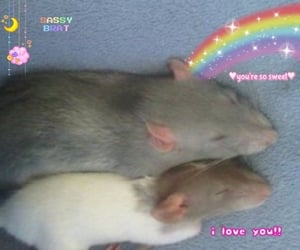 hamster, pastel, and love image