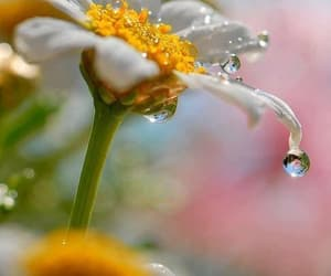 flowers, nature, and rain image