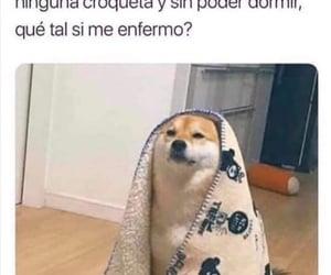 dog, meme, and momo image