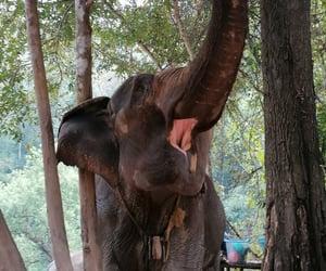 thailand, elephant, and nature image