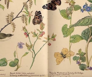 book, books, and butterflies image