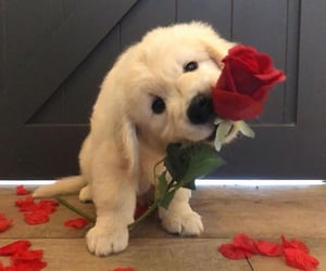 love, cute, and dog image