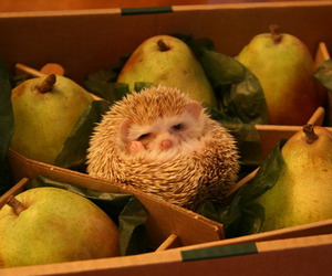 cute, hedgehog, and pear image