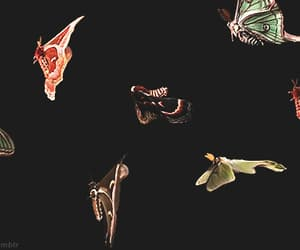 aesthetic, gif, and butterfly image