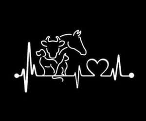 -animals and -veterinary image