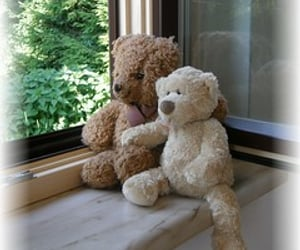 bar, stuffed animals, and window image