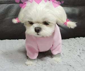 amor, doggy, and hola image