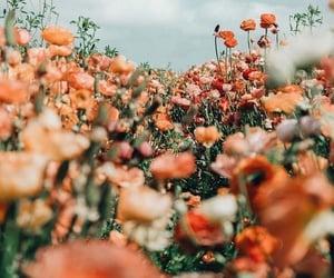 flowers, nature, and orange image