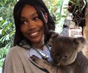 Koala, cute, and sza image