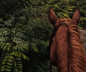 equestrian, forest, and freedom image