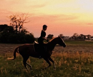 equestrian, freedom, and gallop image