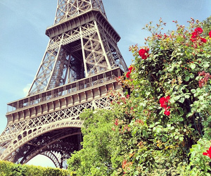rose, france, and paris image