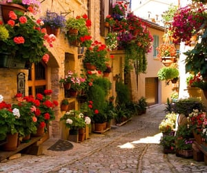flowers, italy, and travel image