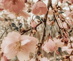 amazing, flowers, and garden image