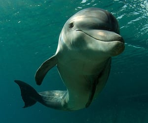 Animales, delfin, and mar image