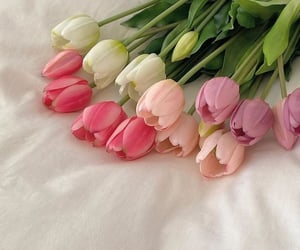 flowers, pink, and soft image