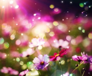 bokeh, colorful, and lovely image