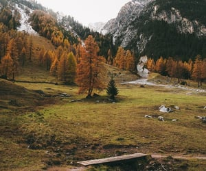 autumn, green, and life image